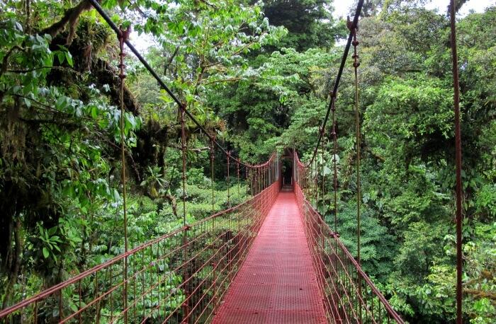 Monteverde Cloud Reserve Forest
