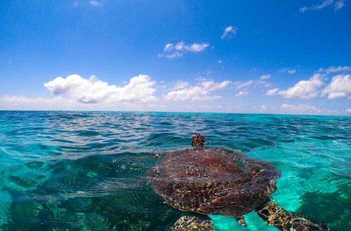 Ocean Safari Diving