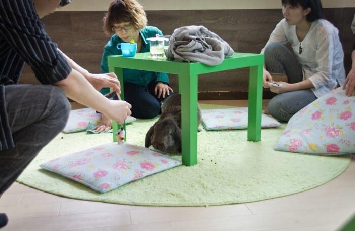 R.a.a.g.f Rabbit Café