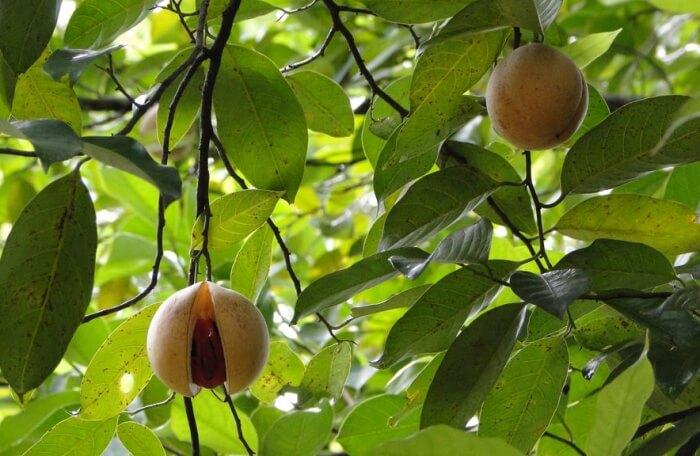 Ranweli Spice