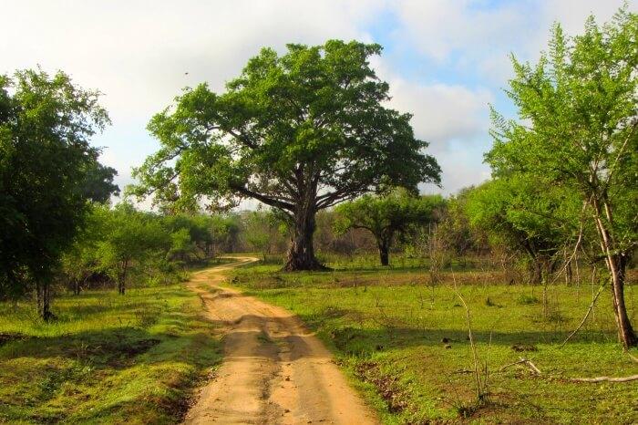 Reaching Wasgamuwa National Park