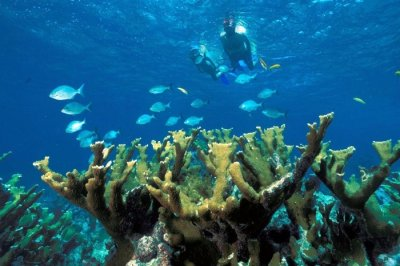 Scuba Diving In Miami