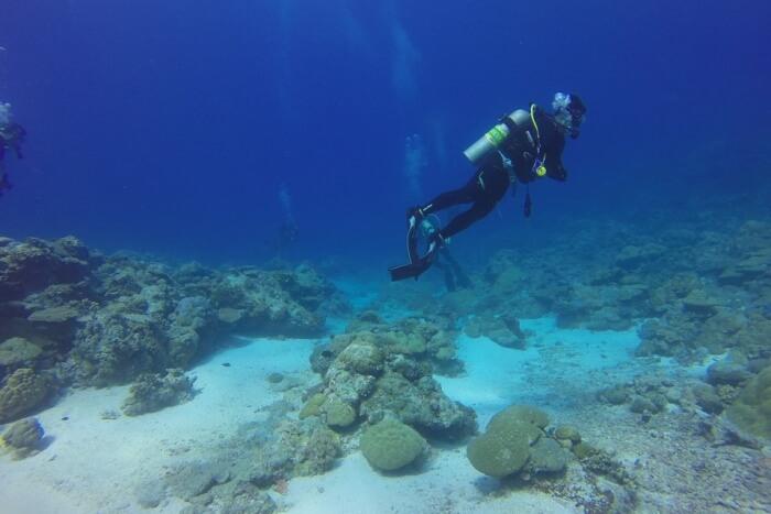 Diver Dive Palau Scuba Diving Scuba Diver Scuba