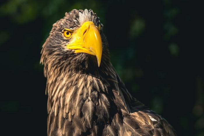 Close look of Sea Eagles