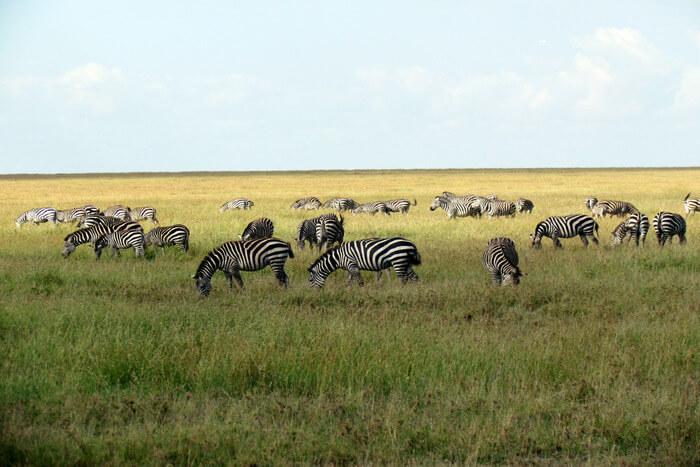 Serengeti_National_Park