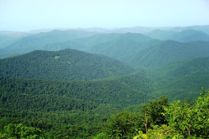 Forest view from top