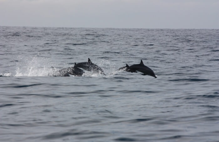 Spotting the whales and dolphins