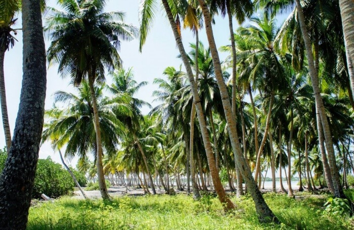 Take a walk along the Palm Tree Forest