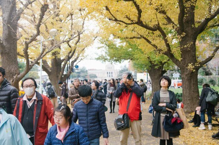 Take part in the Meiji Jingu Gaien Ginkgo Festival