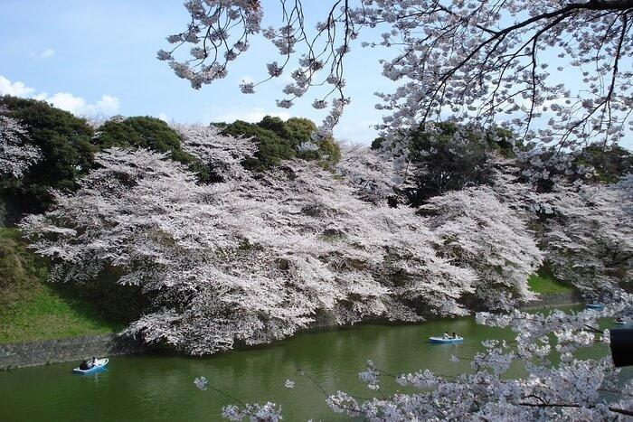 Glorious Flora of Japan