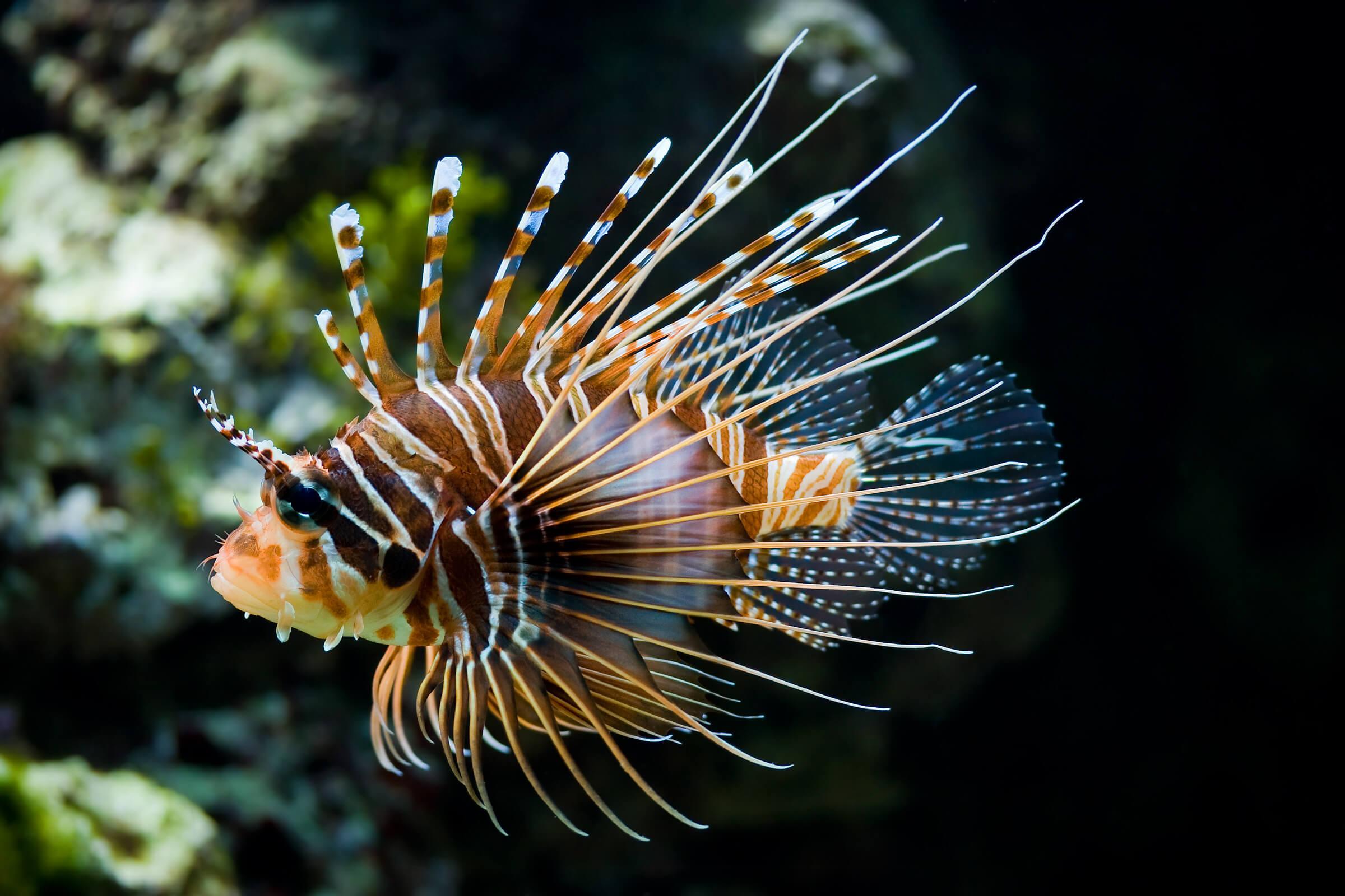 constitute Mauritius's rich aquatic life