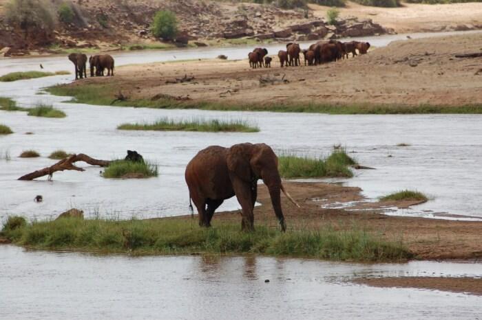 Wasgamuwa National Park things