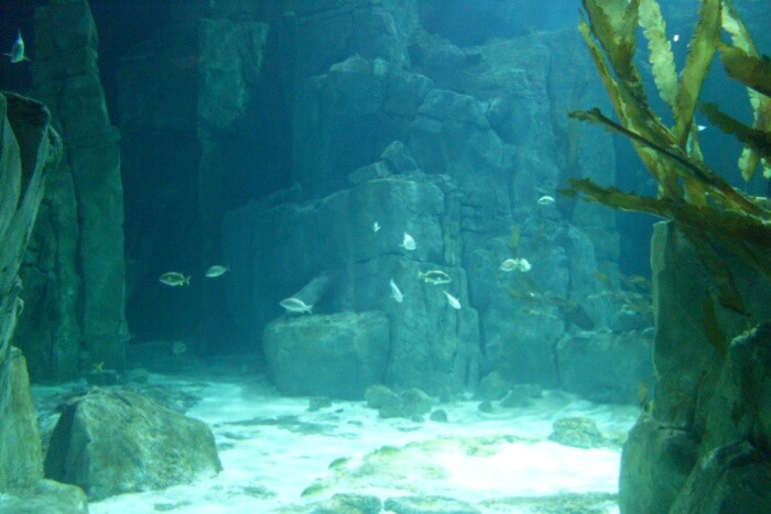 Wave with fishes at Istanbul Aquarium
