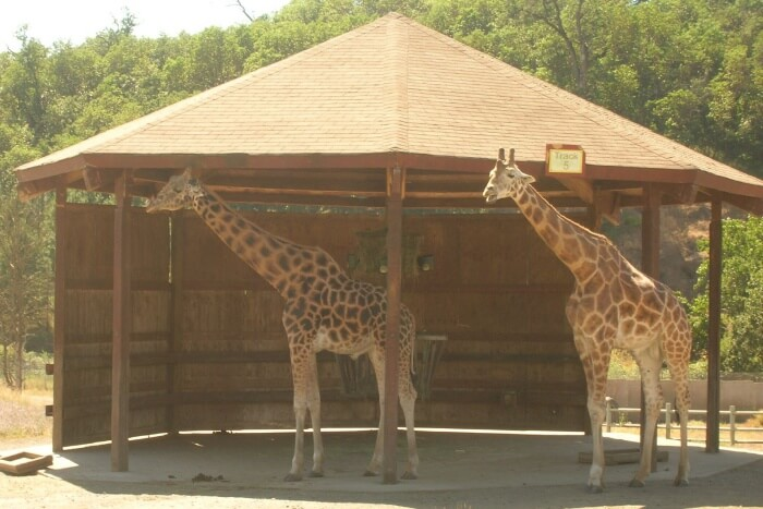 Wildlife Safari, Winston