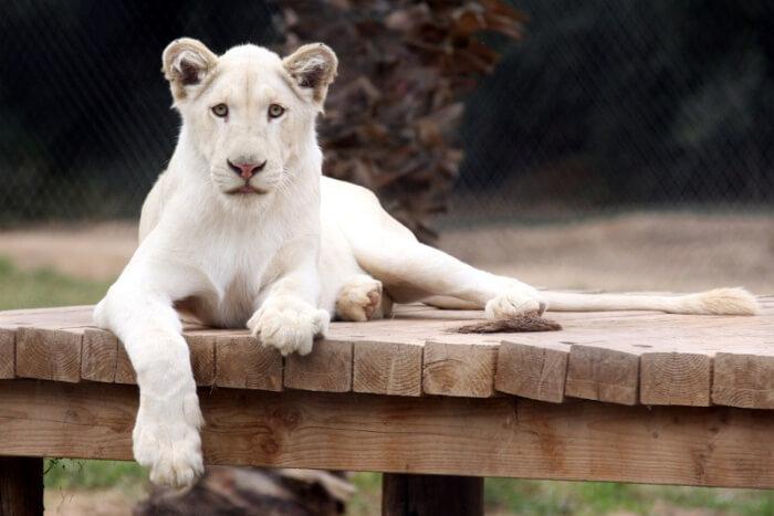 Wildlife World Zoo, Aquarium, and Safari Park
