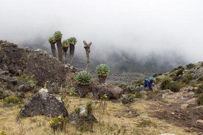Amazing Trekking In Tanzania