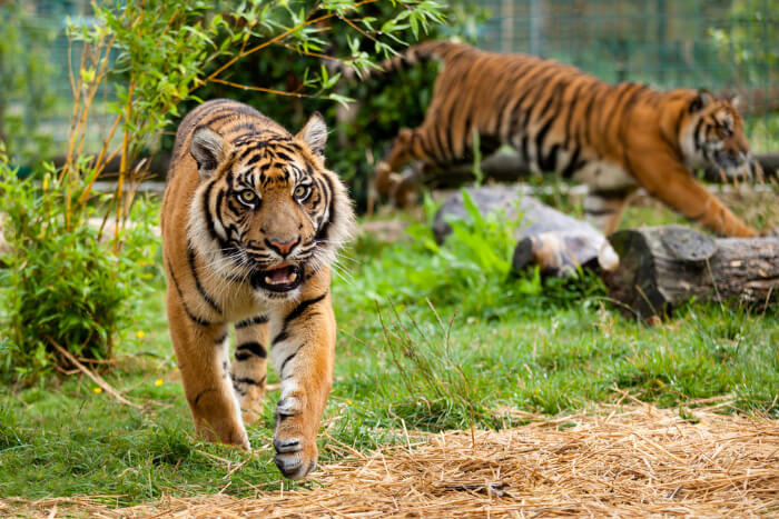 Best Zoos In Gold Coast