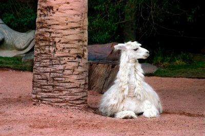 Famous Zoos In Las Vegas