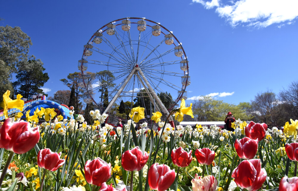 ferris wheel against a flower garden