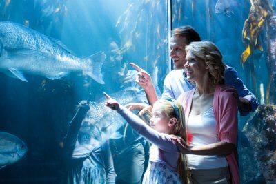 Mesmerized by Mauritius Aquarium