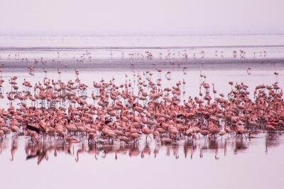 tanzania april