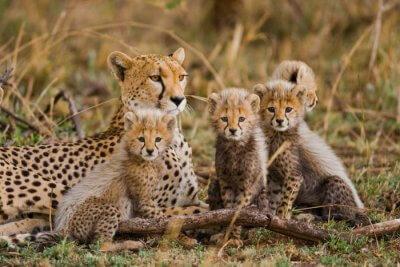 tanzania wildlife cover
