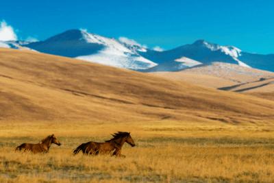 wildlife in Kazakhstan