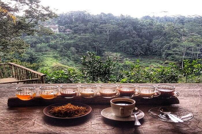 About Coffee Plantation At Bali Pulina Agro Tourism