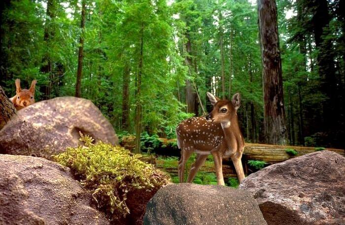 Animal Sightseeing