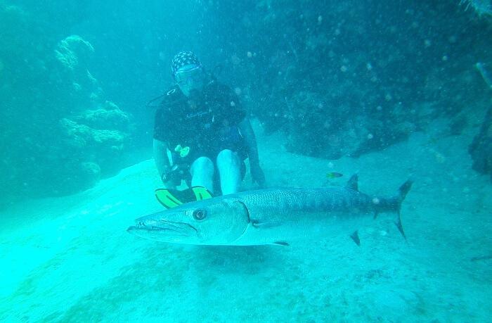 Barracuda Reef