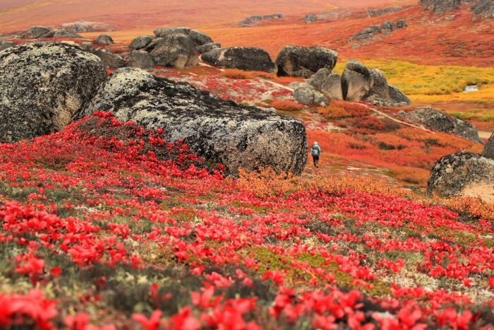 Bering Land Bridge National Park