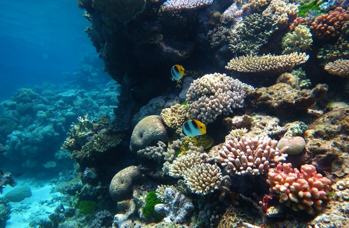 Coral reef view