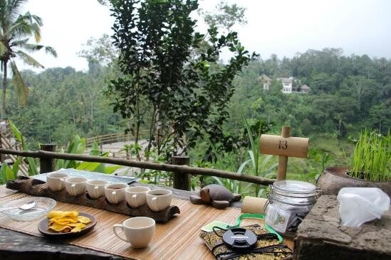 Best Time to Visit The Coffee Plantation