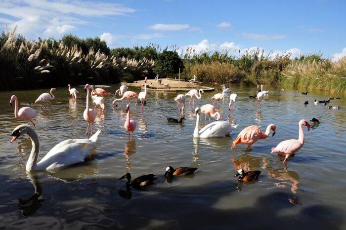 Bird Park, Malta