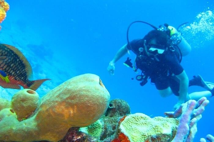 Sea Coral Ocean Water