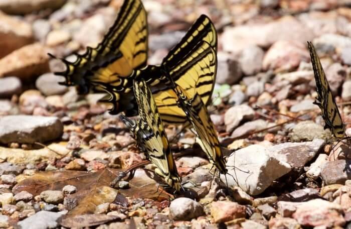 Butterfly-Creek