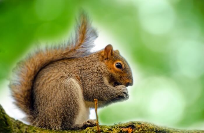 Squirrel View