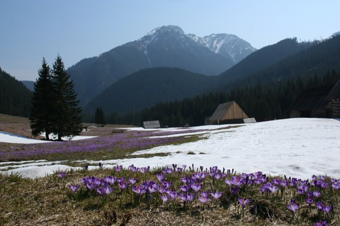 Chocholowska Valley