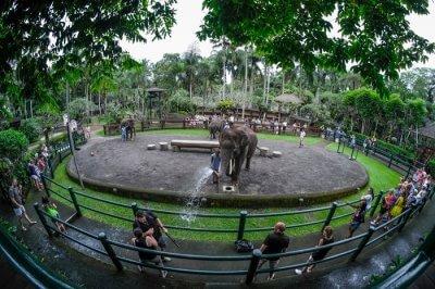 Amazing Elephant Safari Park North Ubud