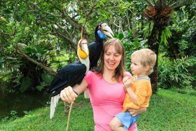 Cover for Bali Bird Park