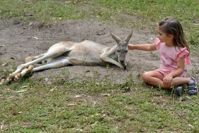 Wildlife In Gold Coast