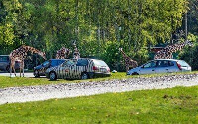 germany safaris