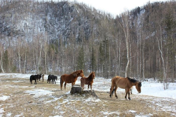 Durminskoye Reserve of Siberia
