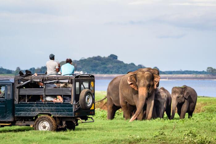 People watching elephant herd at Kui Buri National park