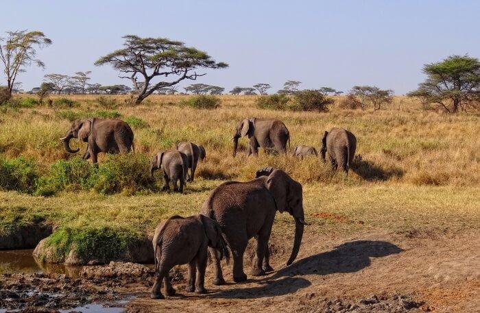 Elephant's view