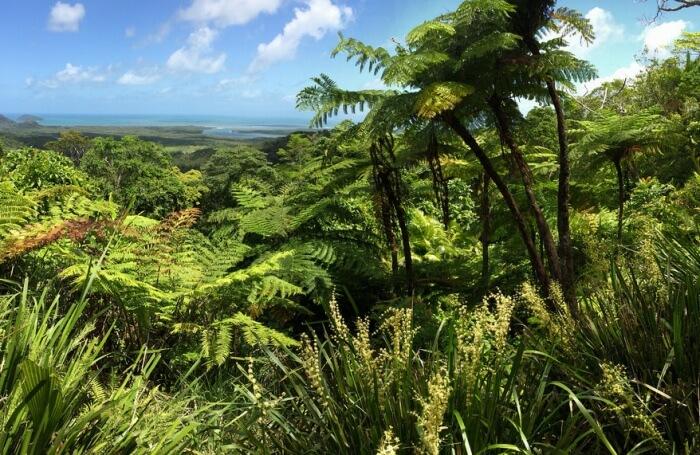 Experience Rainforest Adventure