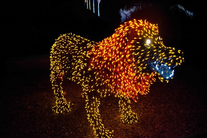 Experience The Zoolights In Phoenix Zoo
