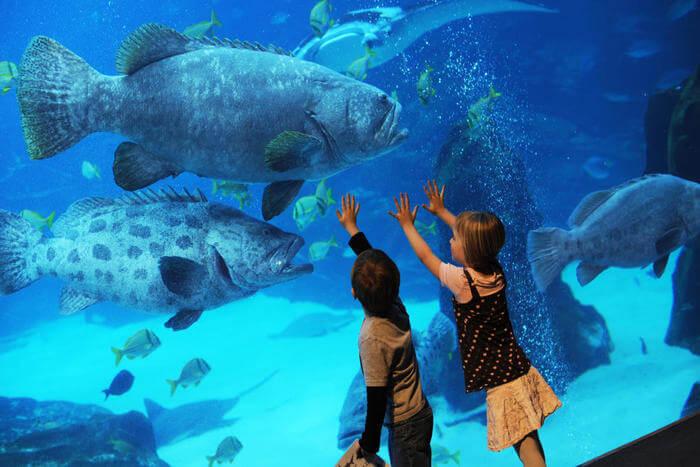 Aquarium of Georgia