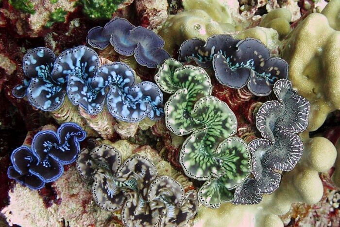 Giant Clams and Underwater Cave