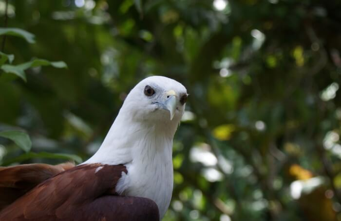 Go-to-the-Philippines-Eagle-Centre